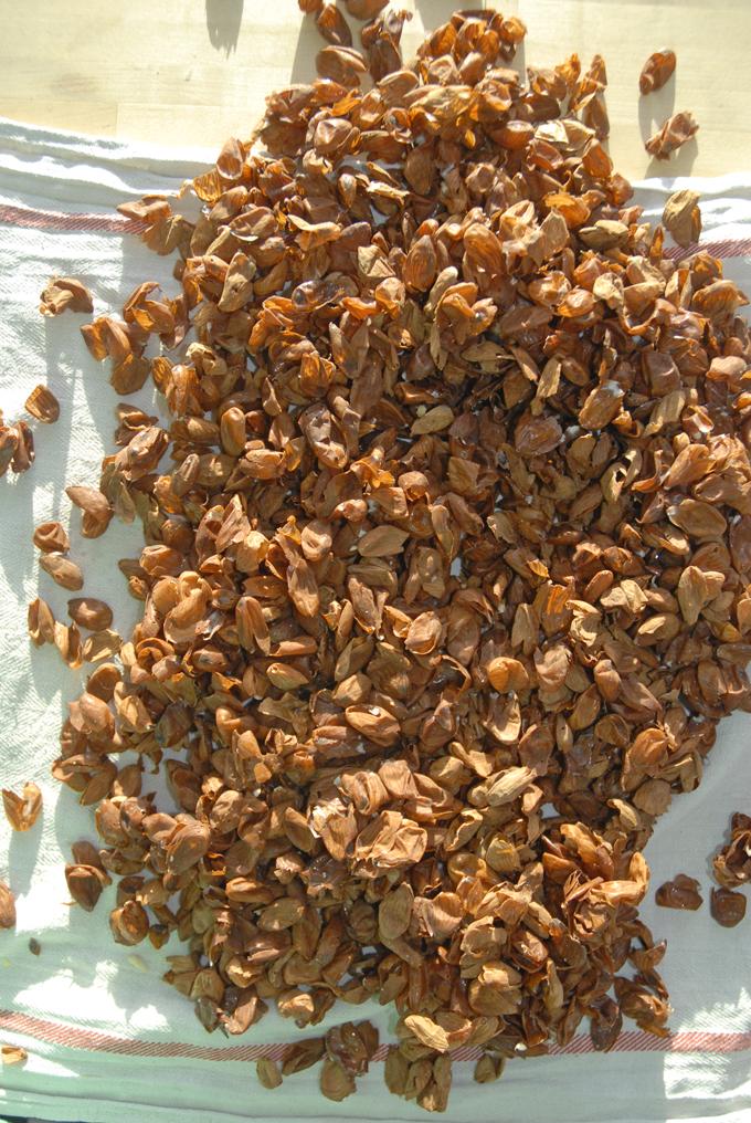 Skaller fra smuttede mandler