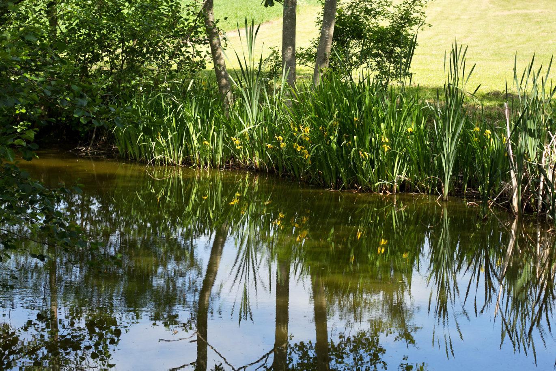 Elmegården sø